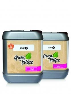 Green Tulipz A&B Start