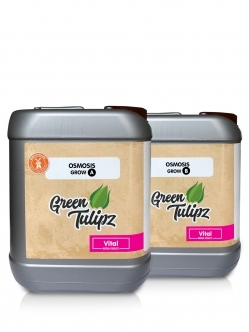 Green Tulipz Osmosis A&B Grow