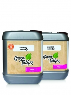 Green Tulipz Osmosis A&B Bloom